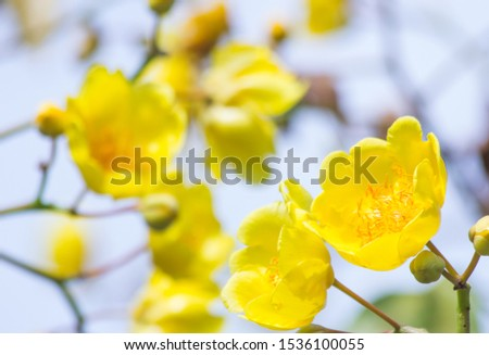 the flower in nature abstract background, the nature background, plant in nature