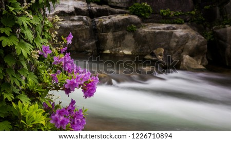 The flower is on the stream. stream that is dynamic and flowers and rocks  which are static make conflicting feeling.
