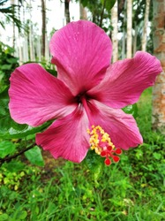 The flower locally called as chembarathi.Chembarathi flowers are comment seen in Kerala villages.English name Hibiscus Rosa sinensis.