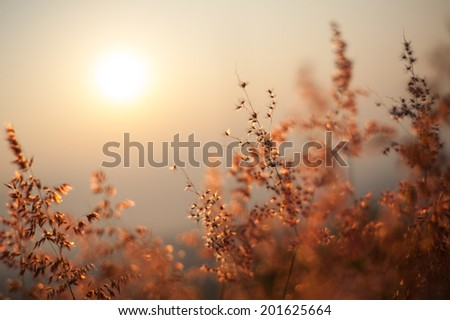 The flower with sunlight