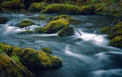 The flowing mountain brook. Slow water between mossy brooks.