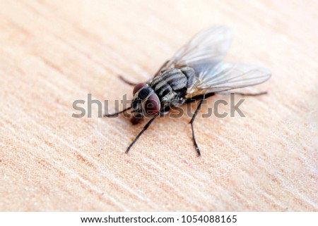 The fly crawling on the table. #1054088165
