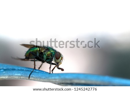 The fly on the fly