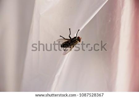 The fly stand at the carrying bag, rubbing hands. - Shutterstock ID 1087528367