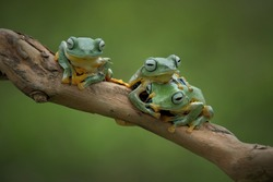 the flying frogs on twigs