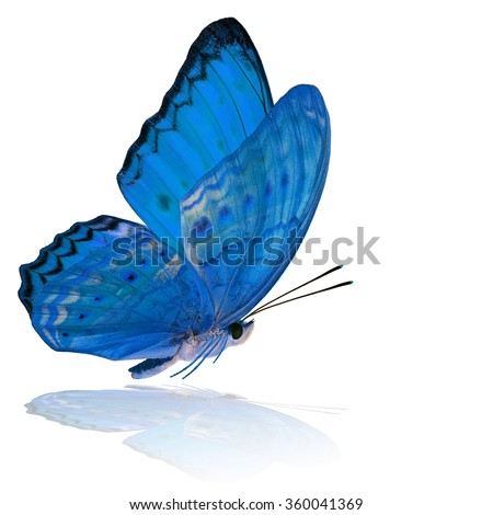 color profile royalty free grace of flying pale blue butterfly 360041375