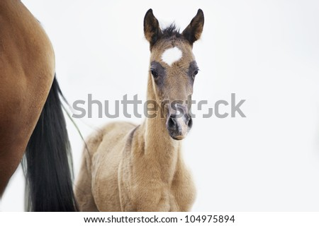 the foal near his mother