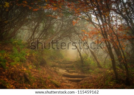 The fog settled in on Craggy Garden Trail on an autumn day. All the colors combined with the misty evening gives this scene an eery yet magical feel.