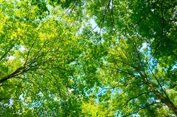 The foliage of the trees against the blue sky.