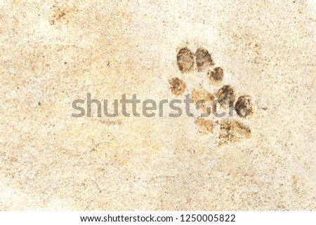 the footprints of animals on the floor #1250005822