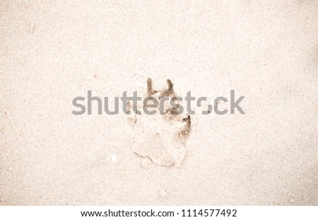 The footprints of animals that walk on the beach by the sea #1114577492