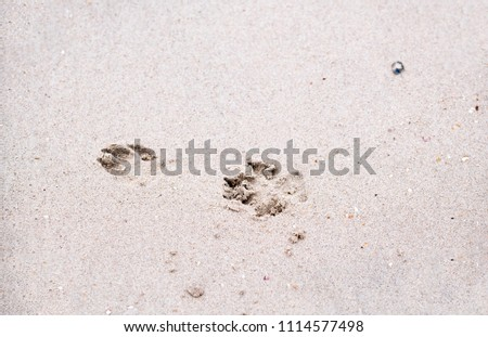 The footprints of animals that walk on the beach by the sea #1114577498