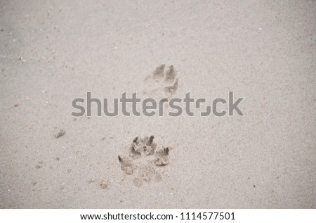 The footprints of animals that walk on the beach by the sea #1114577501