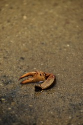 The forelegs of a dead crab lying alone on the beach