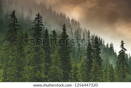 The forest after the storm #1256447320