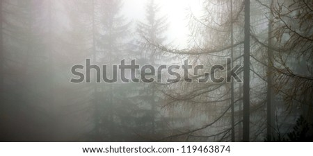 the forest in deep fog