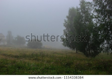 the forest is dozing in the dense milky fog