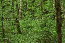 The forest is not just a collection of trees and shrubs, the forest is an ecosystem-a complex community of closely related elements, which includes both living organisms (biota) and inanimate, abiotic