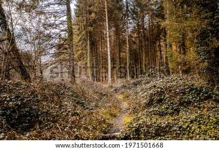 The forest path goes deep into the woods. Path in forest. Pinewood forest path. Forest path way
