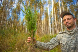 The forester shows green seedlings of trees. The seedlings were eaten in the man's hand.