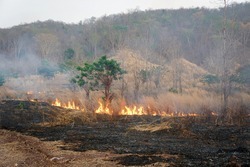The forests and trees are being destroyed by the fire. Global warming problem. air pollution, PM 2.5 concept.