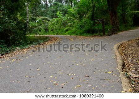the forked road with fallen...