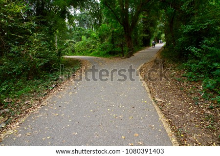 The forked road with fallen leaves in the forest. The abstract concept of decision, divergence, choice and option. The Road Not Taken. Foto stock ©