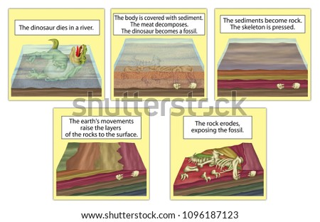 The formation of fossils, fossilization - process of forming a fossil. Fossil formation. Sequential artwork of the formation of a dinosaur fossil Stockfoto ©