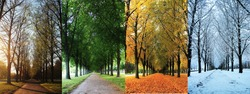 The four seasons of the herrenhausen garden alley in hanover / Germany - spring, summer, autumn, winter