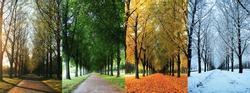The four seasons of the herrenhausen garden alley in hanover / Germany - spring, summer, autumn, winter