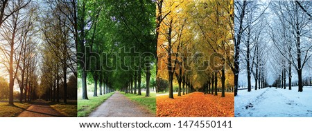 The four seasons of the herrenhausen garden alley in hanover / Germany - spring, summer, autumn, winter stock photo