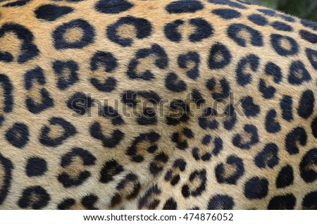 The fragment of leopard fur coat #474876052