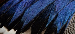 The fragment plumage of a duck.