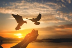 the freedom,The image of a pigeon flying from two hands, a young woman and an independent concept and the day of international peace