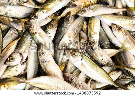 The fresh and fresh fish of the Mediterranean #1438873592
