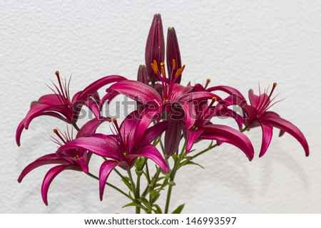 the fresh lily blooming bouquet