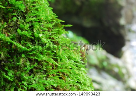 The fresh moss with the stone background