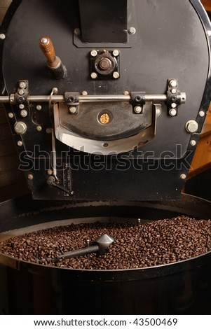 The freshly roasted coffee beans from a large old coffee roaster being stirred in the cooling cylinder. #43500469