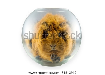 The frightened porpoise in a transparent glass sphere