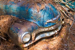 The front bumper and hood of an old rustic automobile long abandoned.