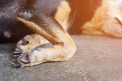 The front legs dog with knee curve while sleeping on the floor.