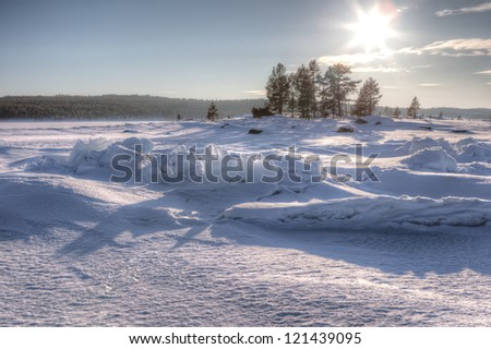The frozen trees on snow coast of the winter sea Barents