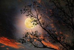 The full moon on beautiful sky with tree