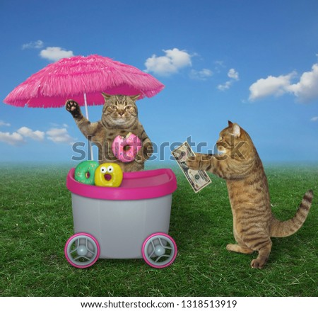 The funny cat buys donuts at the mini movable pink kiosk in the park.