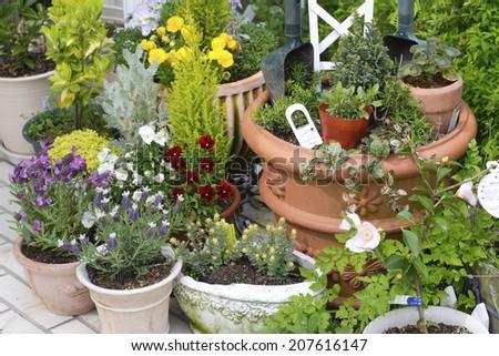 The Garden Of A Pot Container Garden