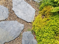 The Garden stone paving with small ferns .