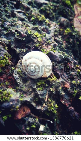 The gastropod shell is part of the body of a gastropod or snail, a kind of mollusc.