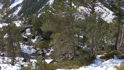 The Gaube Valley frozen path surrounded by rocky slope, spruce and pine trees, near the town of Cauterets in the Haute-Pyrénées department, France.