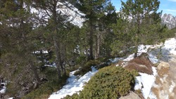 The Gaube Valley frozen path surrounded by rocky slope, spruce and pine trees, near the town of Cauterets in the Haute-Pyrenees department, France.