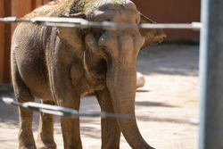 The giant elephant stands inside the gate